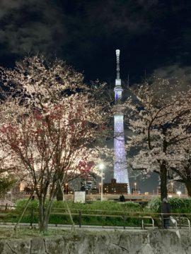 東京スカイツリーと桜の画像